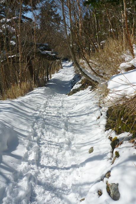 ハイキングコースのような登山道