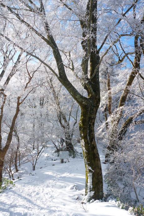 霧氷の森再び