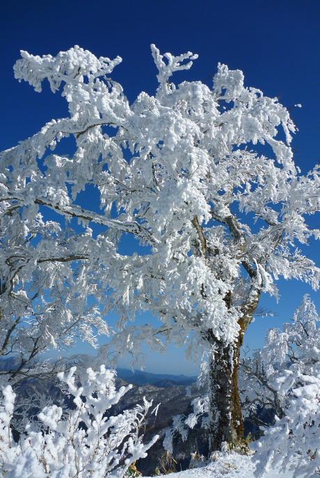 夜明峠の霧氷1