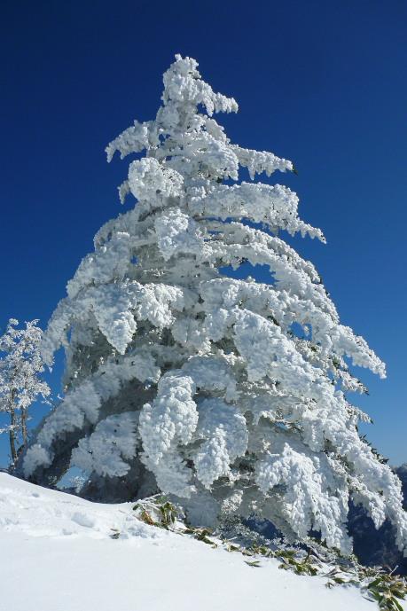 夜明峠の霧氷2
