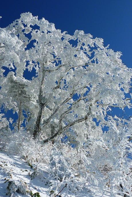 夜明峠の霧氷3