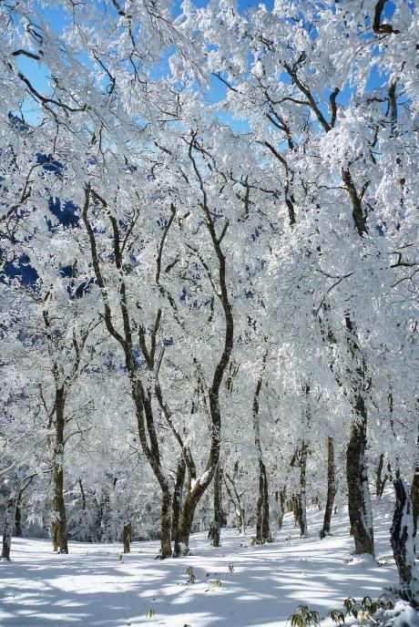 夜明峠の霧氷4