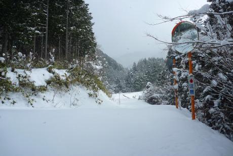 広い林道との合流点