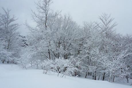 着雪した木々
