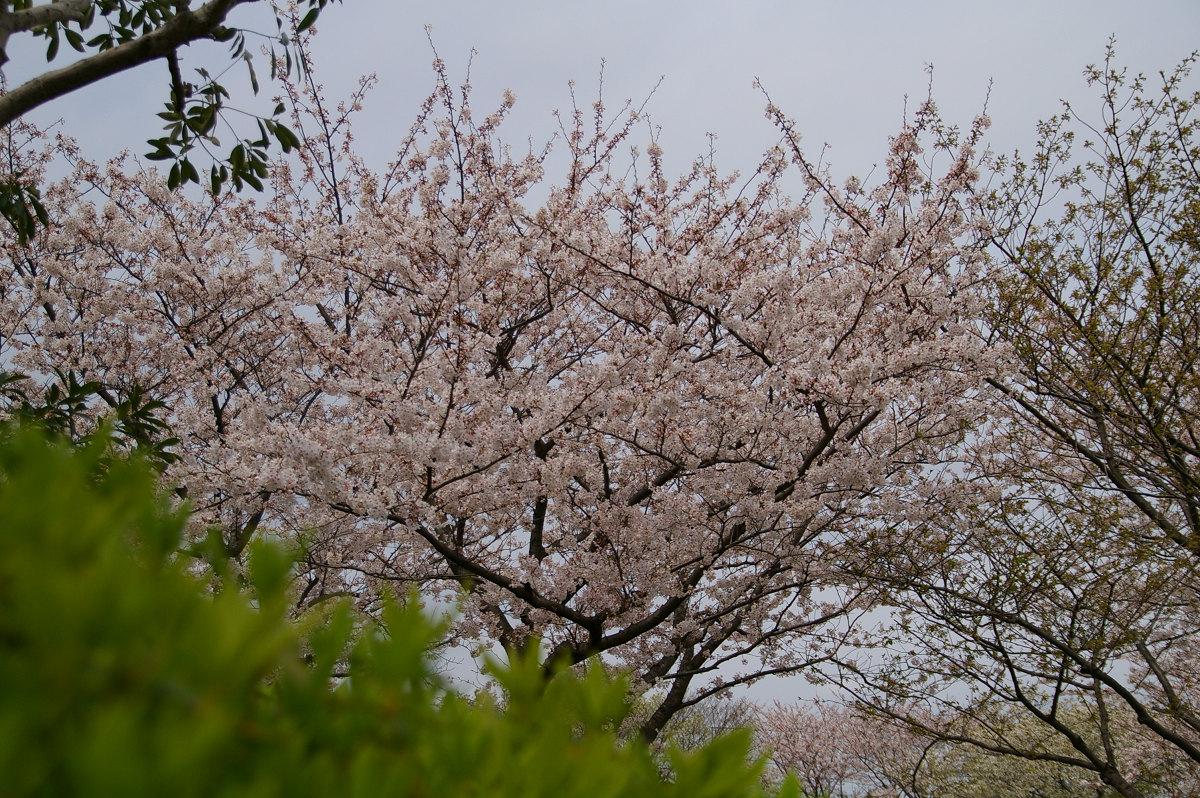 s2007-03-31_11.53.44.jpg
