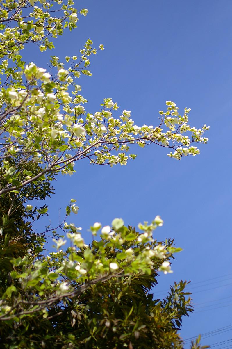 s2007-04-14_14.27.10_0006.jpg