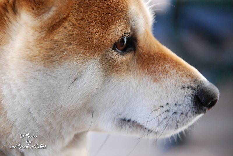 犬 すずちゃん 西条市福森町にて 2007/1/22