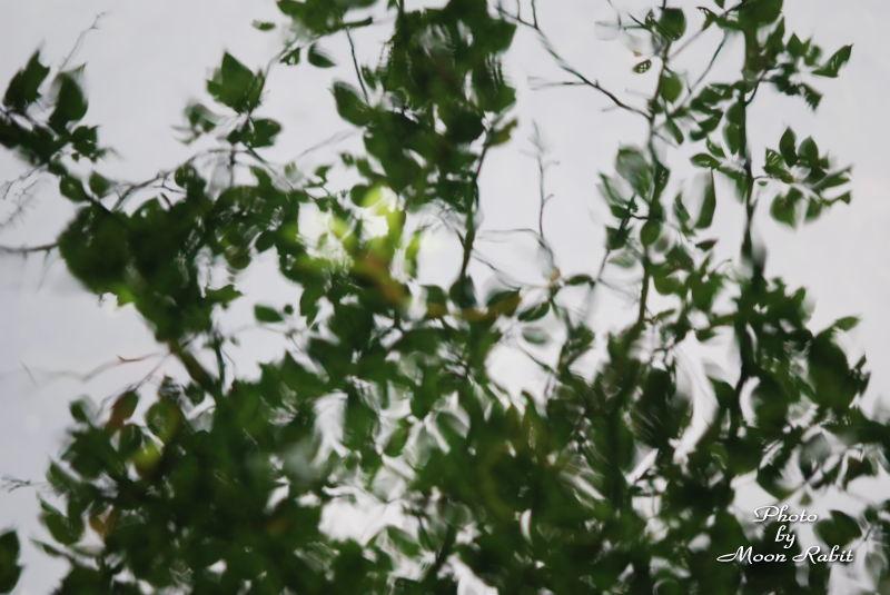 樹木と水面 西条市御船町にて 07/05/28