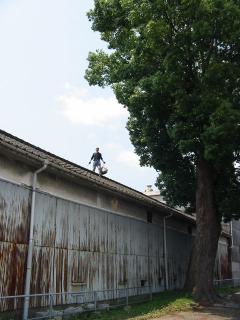 楠と蔵の屋根