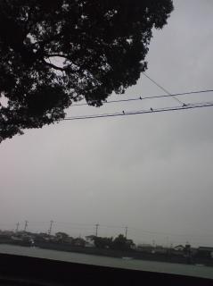 台風とツバメ