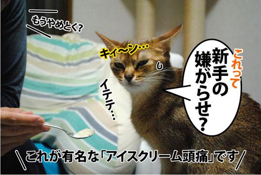 20111129_06.jpg