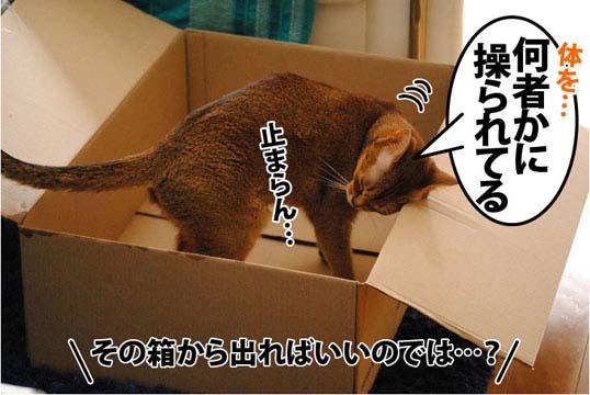 20111205_04.jpg