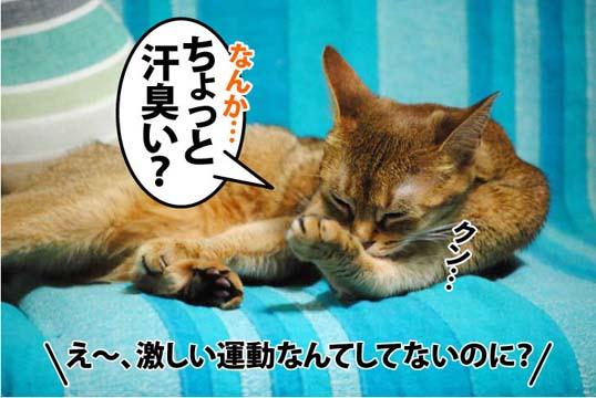 20111209_01.jpg