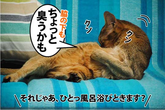 20111209_02.jpg