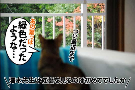 20111212_01.jpg