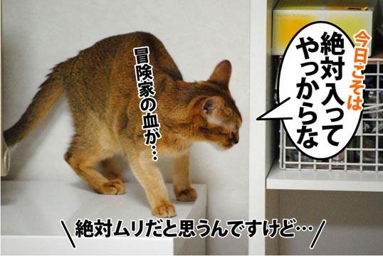 20111213_01.jpg