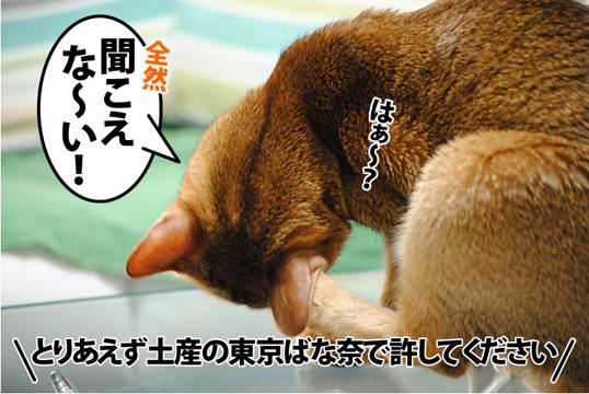20111220_05.jpg