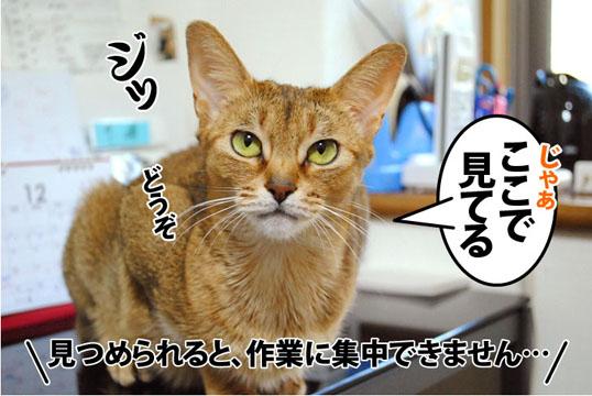 20111229_02.jpg
