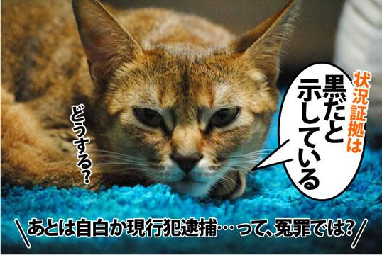 20111230_04.jpg