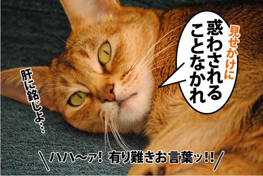 20120105_05.jpg