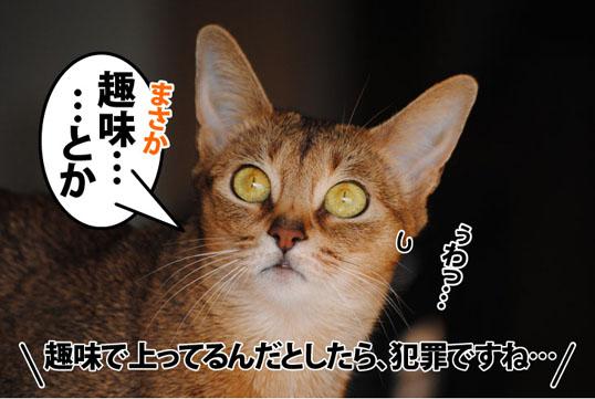 20120129_03.jpg
