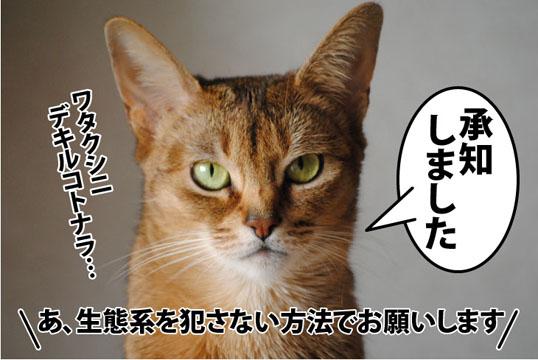 20120131_05.jpg