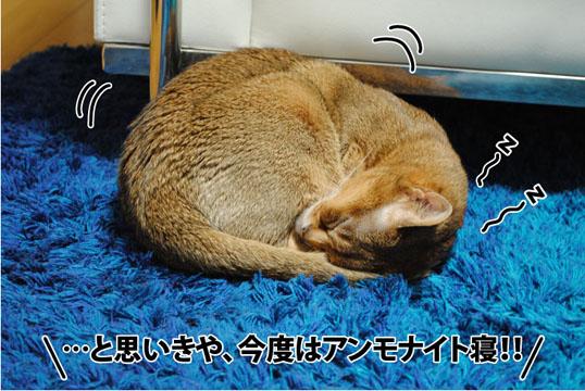 20120205_04.jpg