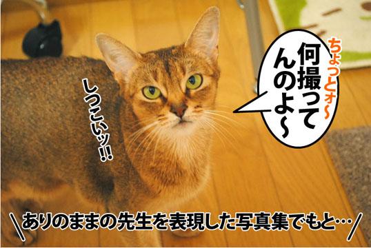 20120206_01.jpg