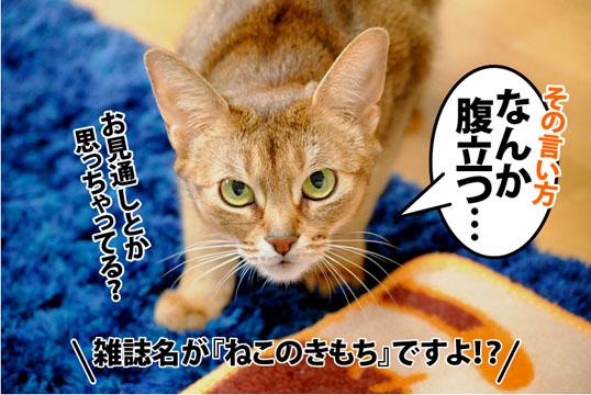 20120207_04.jpg