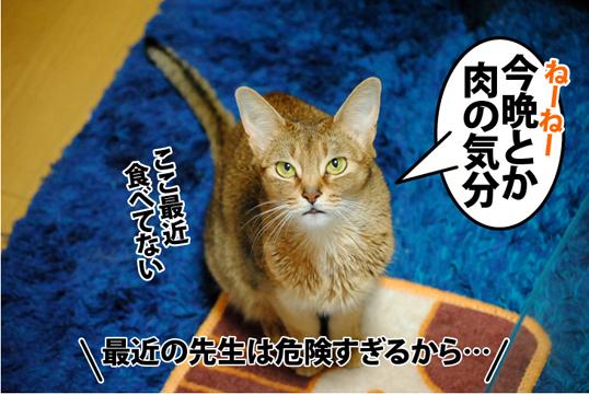20120222_01.jpg