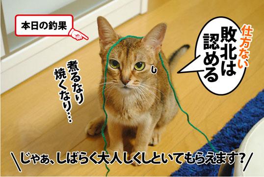 20120302_06.jpg