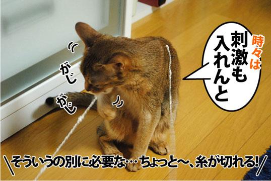 20120306_05.jpg