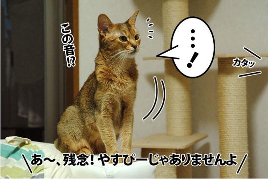 20120309_01.jpg