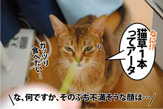 20120316_04.jpg