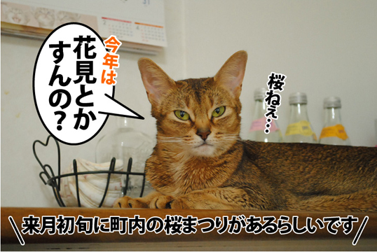 20120322_02.jpg