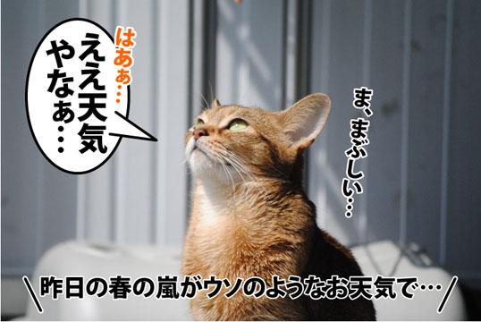 20120403_01.jpg