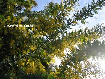 2007.03.09.mimoza-fc2-.jpg