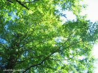 2007/10/28緑葉