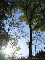 2007/10/28陽と木々