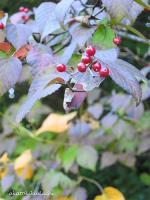 2007/10/28赤い実