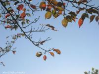 2007/10/28柿と空