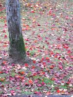 2007/11/10中央公園2
