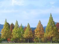 2007/11/10中央公園1