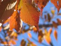 2007/11/19中央公園 紅葉