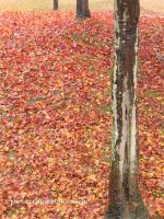 2007/12/03中央公園1
