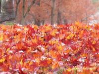 2007/12/03中央公園2