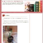 続・鍼たま-表参道・青山・源保堂鍼灸院日誌-