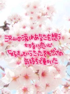 kashi2.jpg
