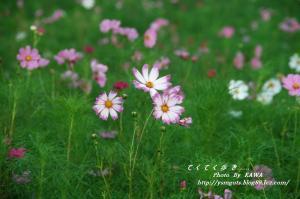 4DSC_55460001.jpg