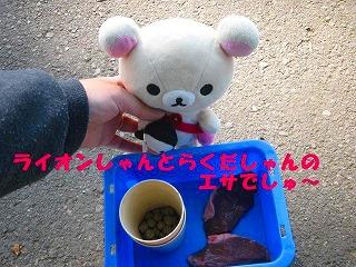 korichan-blog1100.jpg